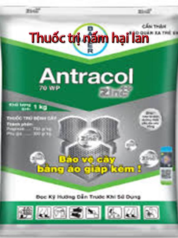 cách pha thuốc antracol