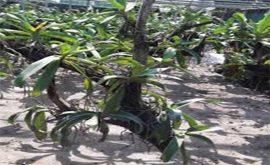 cách trồng lan ngọc điểm mới mua về
