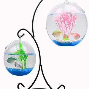 bể cá mini hình x